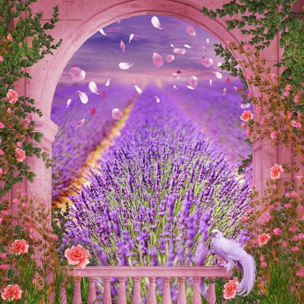 Arch Flower Purple Plant Photography Computer Print Background Arches Or Pillars Theme Digital Backdrops Hxb-092