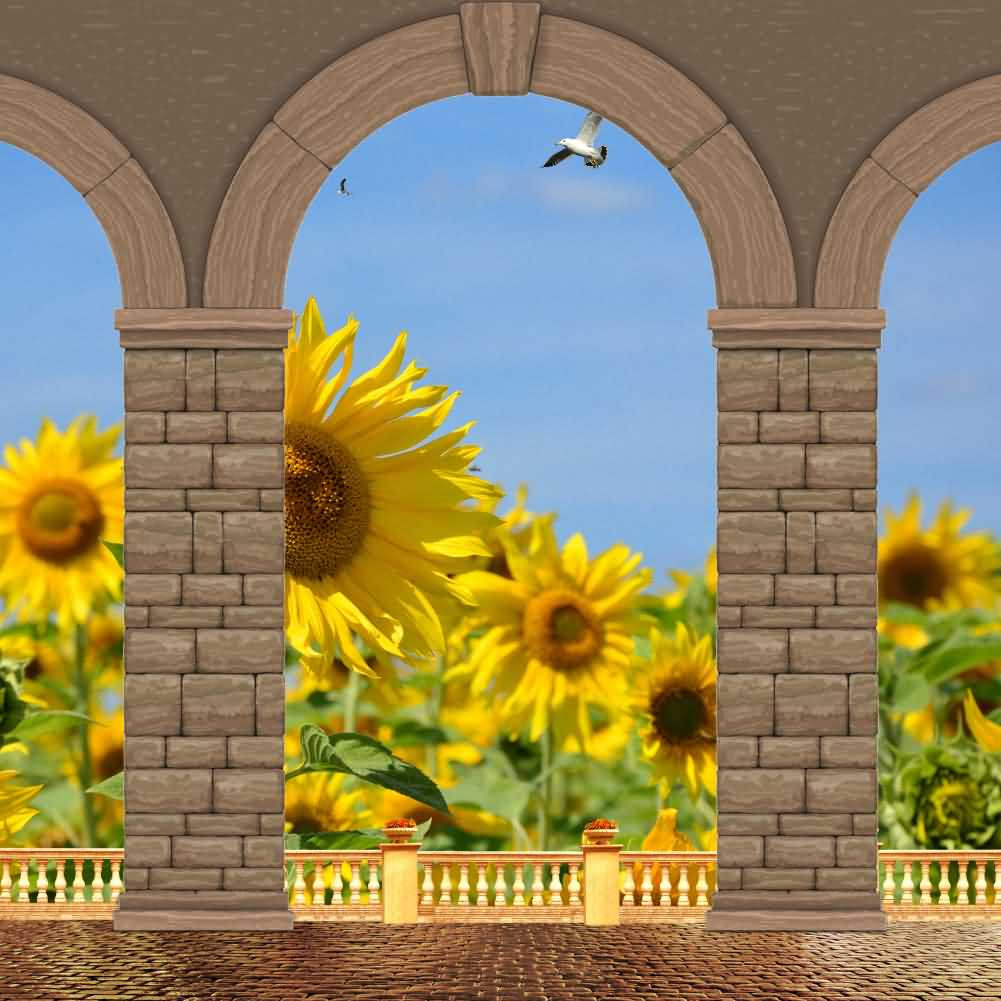Arch Flower Sky Bird Photography Computer Print Background Arches Or Pillars Theme Digital Backdrops Hxb-093