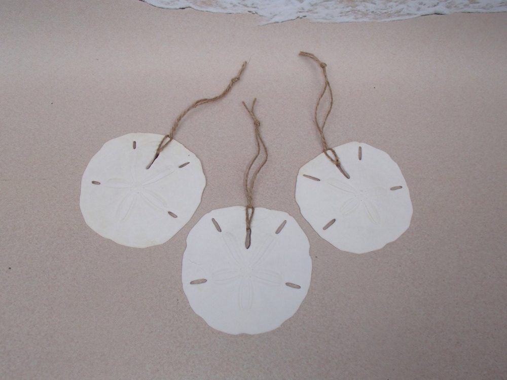 "Set Of 3 Sand Dollar Ornaments - 1/2"" Each Beach Wedding Favors Rustic Coastal Nautical Christmas Ornament Favor Sanddollar"