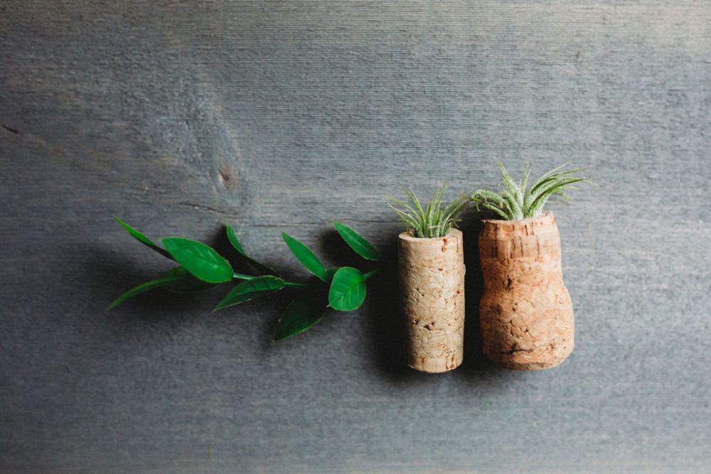 50 Pack Of Magnetic Wine Cork Air Plant Favors-Wine Favors, Winery Gifts, Bridal Shower, Wedding, Baby Rustic Wedding
