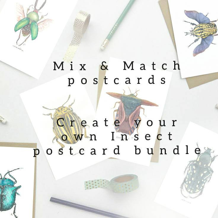 Mix & Match Insect Postcards, Beetle Stationery, Create Your Own Postcard Set, Entomology