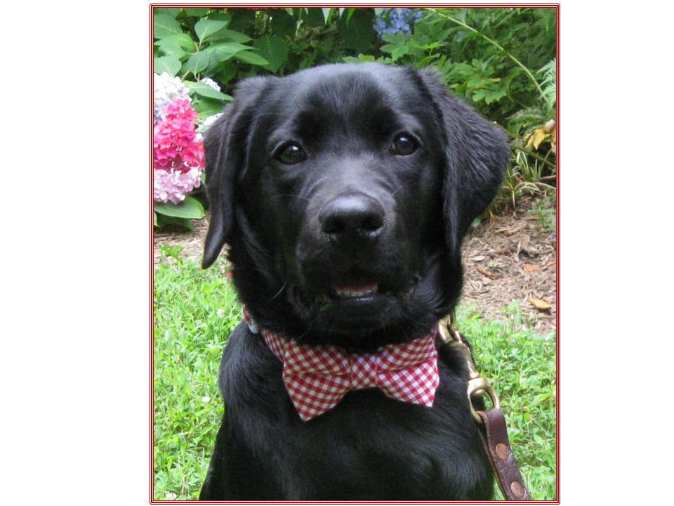 Bow Tie Dog Collar~Dog Wedding Collar~Red Gingham Tie~Wedding Attire~Dog Ring Bearer~Dog Neckwear~Dog Tuxedo~Save The Date~